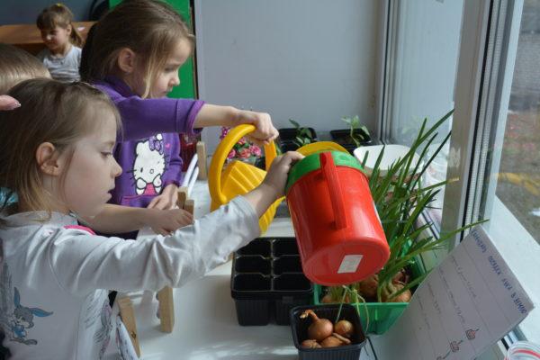 Среда обитания:  Огороды на окнах