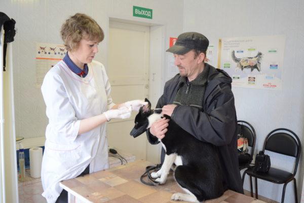 29 апреля — Международный день ветеринарного врача