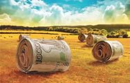 В Костромской области объявлен конкурс на получение грантов на развитие семейных животноводческих ферм