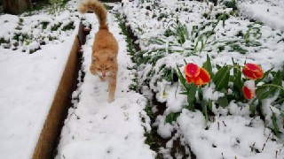 На северо-востоке Костромской области 3 июня выпал снег