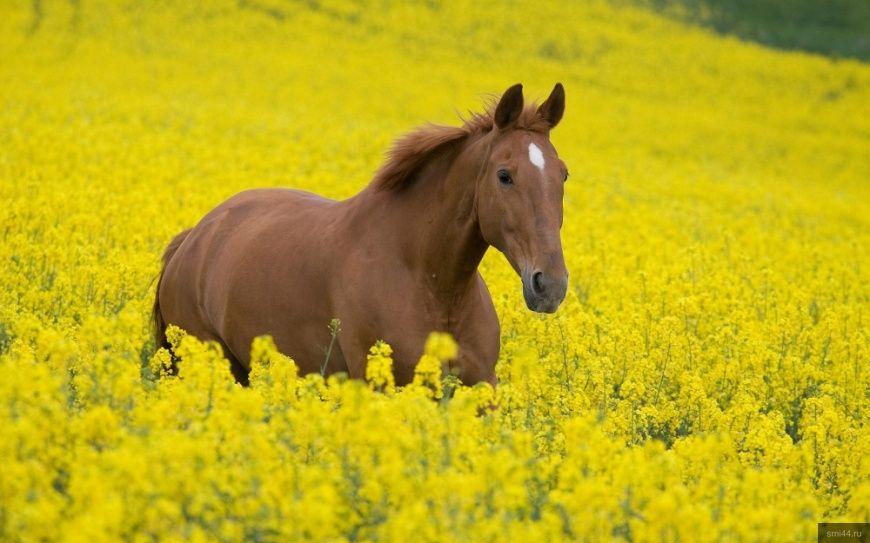 Впервые в новейшей истории Галича пройдет настоящий конный праздник