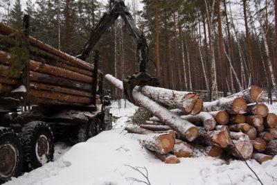 Арендаторы за работой: В лесу горячая пора