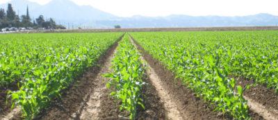 Действуй!  Финансовая поддержка аграриям