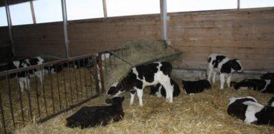 О самом важном: В поддержку фермерских хозяйств