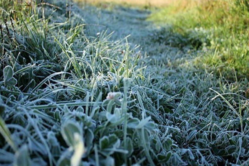 В Костромской области прогнозируют ночные заморозки и усиление ветра