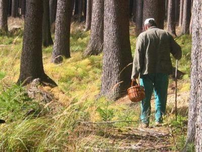 Администрация Костромской области напоминает жителям региона о необходимости соблюдения мер безопасности в лесу
