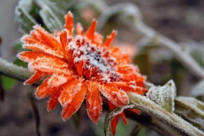В Костромской области прогнозируются ночные заморозки