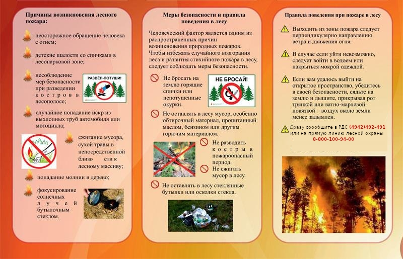 Жителей Костромской области призывают неукоснительно соблюдать правила пожарной безопасности в лесах при сборе дикоросов