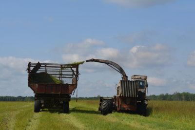 На повестке дня — заготовка кормов