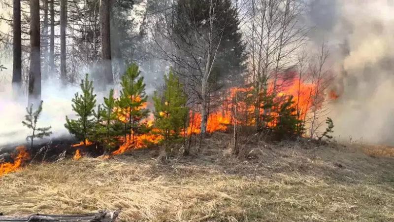 Официально: В Костромской области завершён пожароопасный сезон.
