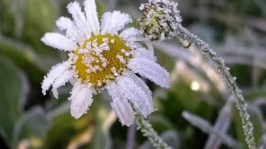 В Костромской области прогнозируются заморозки