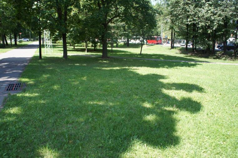 В муниципальных образованиях обследуют состояние зеленых насаждений