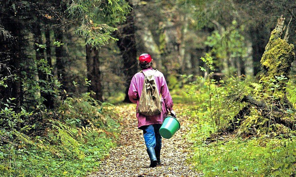 Безопасность: Как организовать свой поход в лес