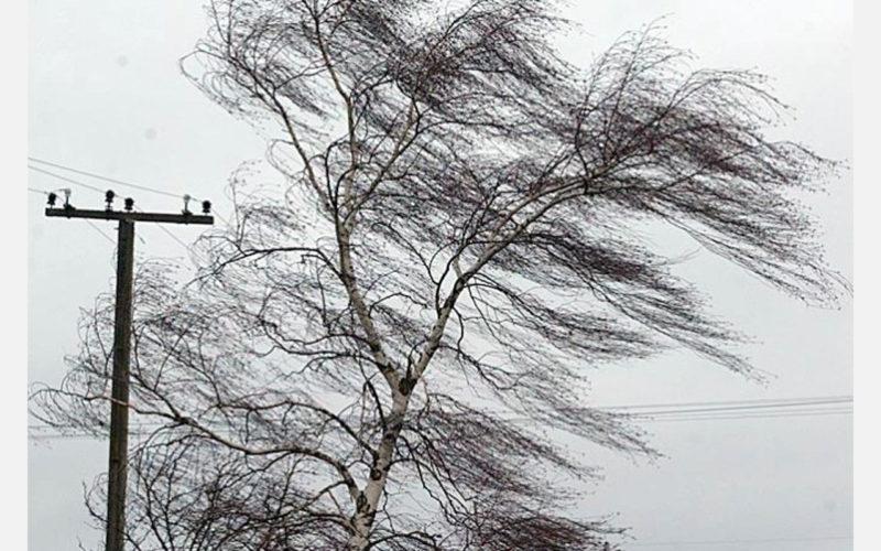 ВНИМАНИЕ: В Костромской области прогнозируется усиление ветра до 17 м/с