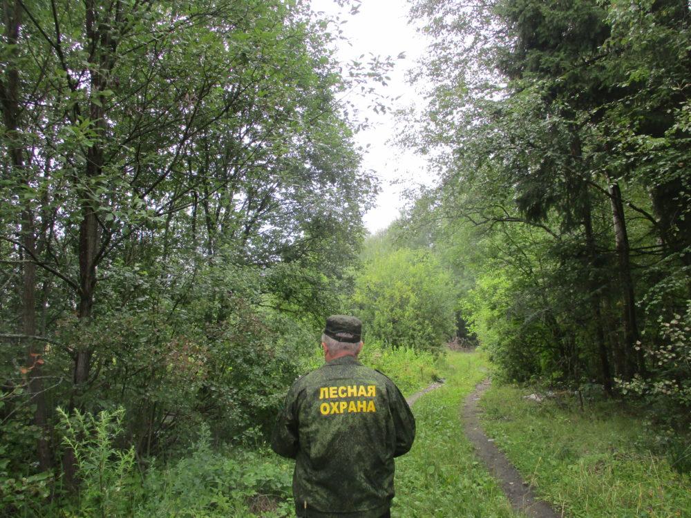 ОПР: Усилено патрулирование лесов