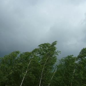 В Костромской области ожидается усиление ветра до 17 м/с