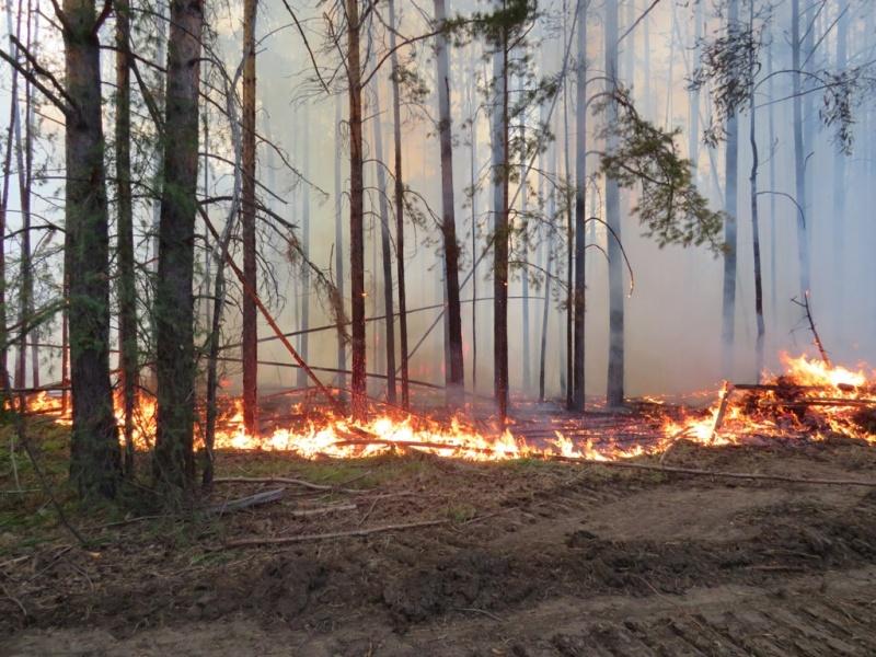 Как себя вести, если оказался в зоне лесного пожара