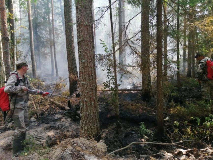 Дополнительные силы и средства направлены в Кологривский район для тушения пожара