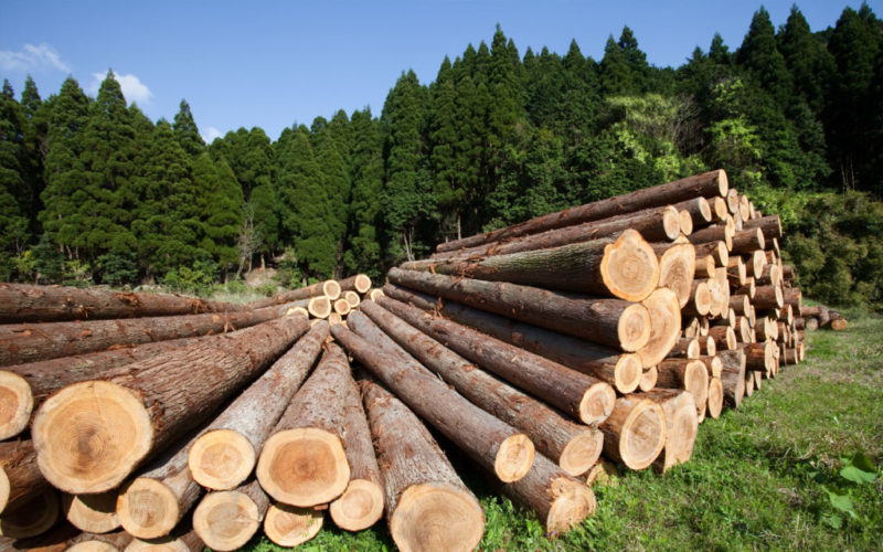 Костромская область развивает переработку древесины внутри региона