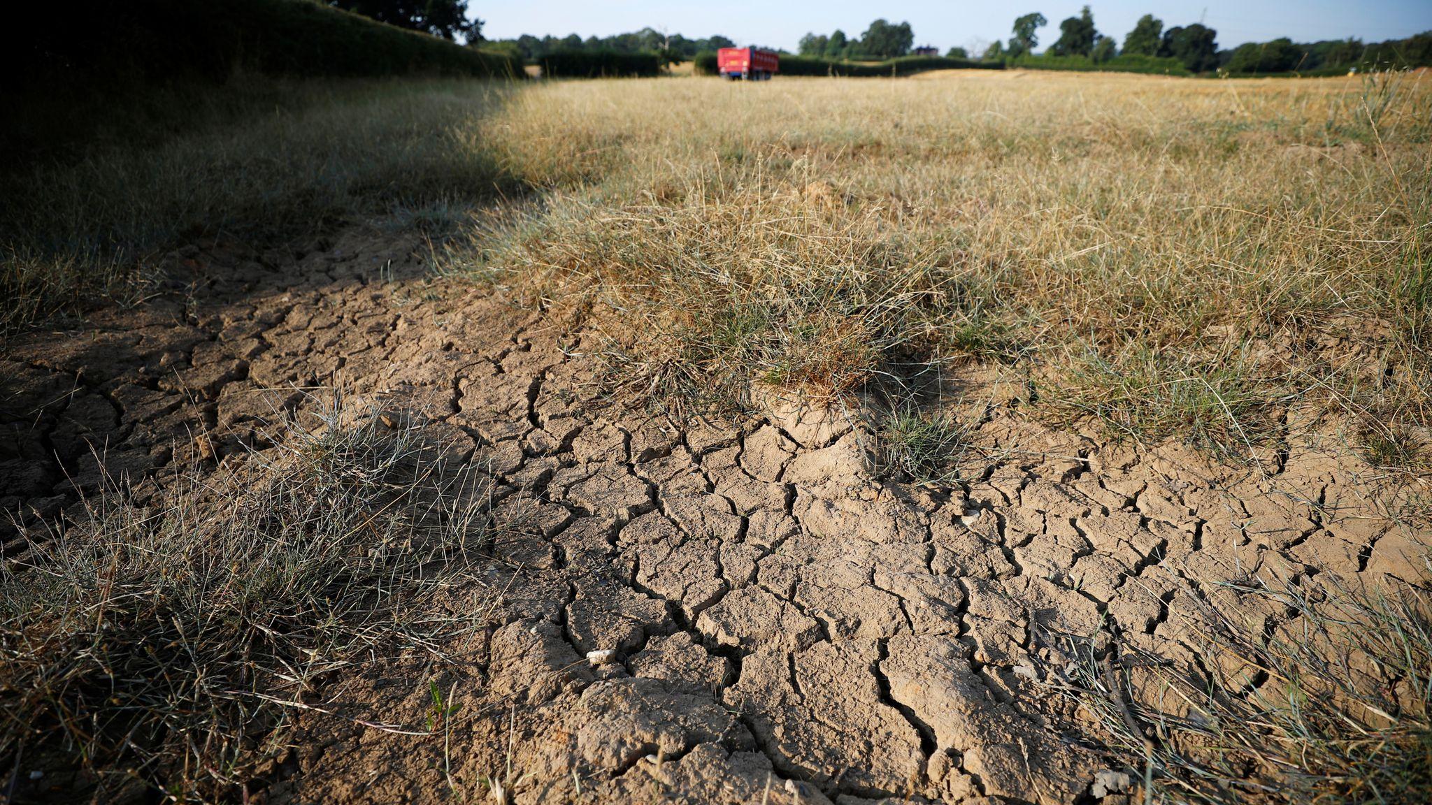 Как дела, АПК? Засуха: кормозаготовка и урожайность под угрозой