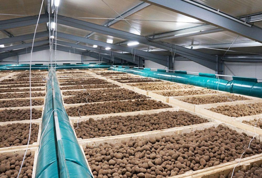 Строительство современного овощехранилища станет стимулом для аграриев к увеличению посадок овощей и картофеля