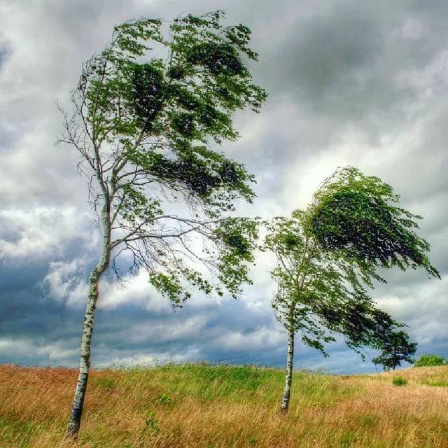 В Костромской области ожидается усиление ветра до 17 метров в секунду