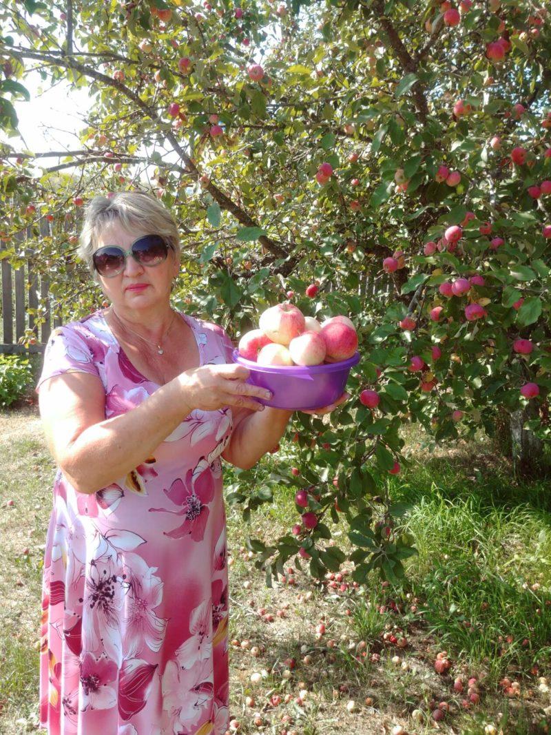 Яблочный спас: «Ласковый, тихий свет  от него в душе — доныне»…