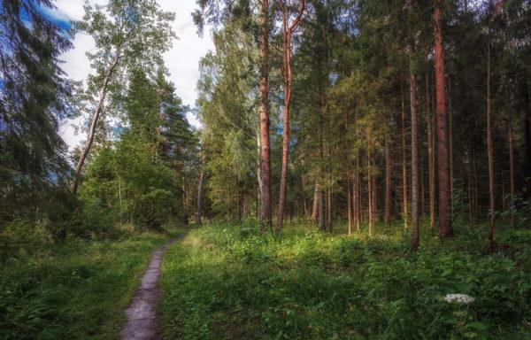 За последние десять суток — ни одного возгорания в лесах Костромской области