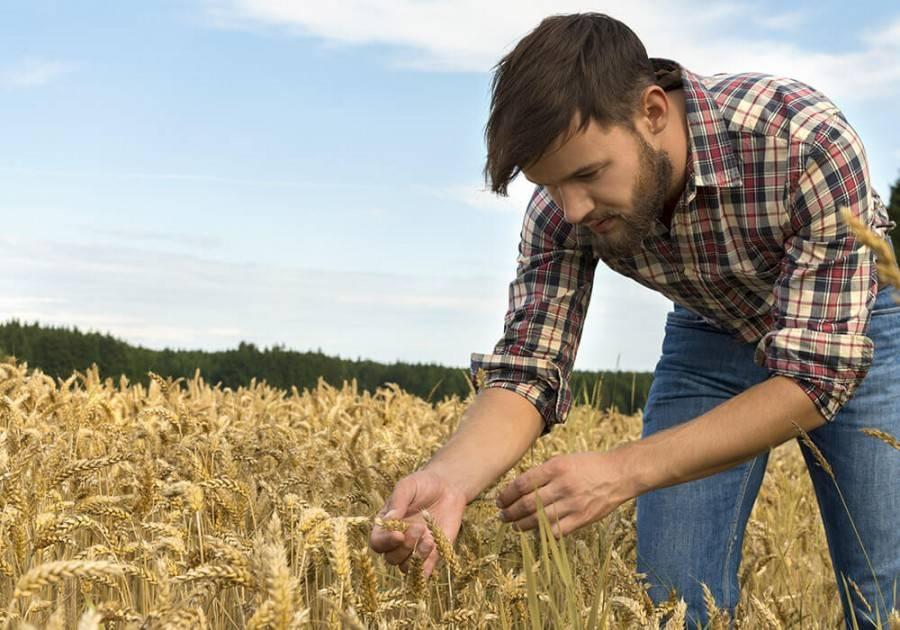 Говорят люди: Фермерство — будущее для села